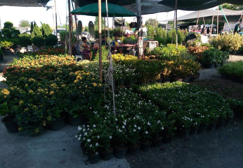 Saim Night Market & Garden Market