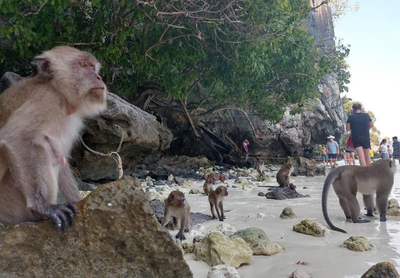 Пляж обезьян на Пхи Пхи