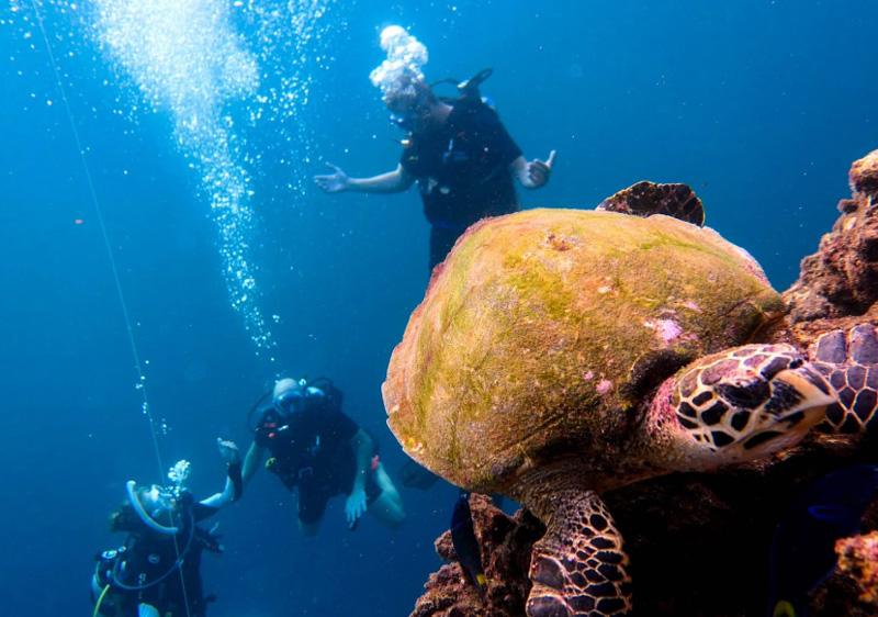 Подводный мир Пхи Пхи