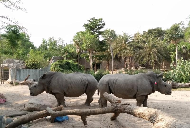 Носороги в Кхао Кео зоопарке