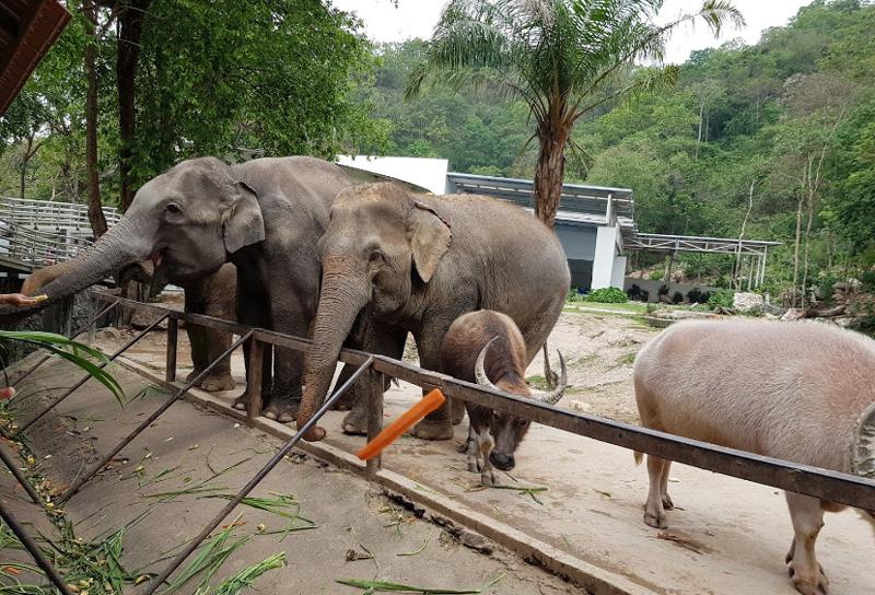 Слоны в Кхао Кео зоопарк