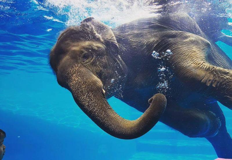Шоу слонов в Кхао Кео зоопарк