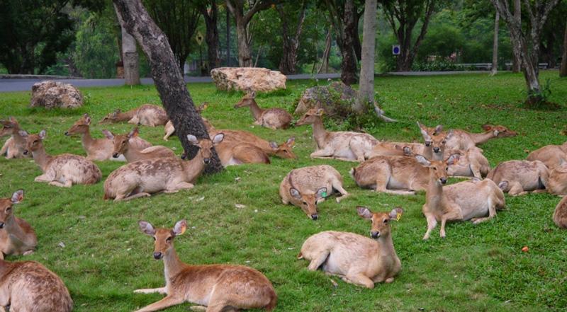 Поляна с оленями