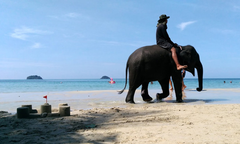 Слоны на пляже Клон прао