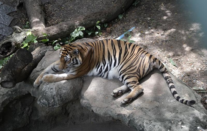 Зоопарк Dusit Zoo Бангкок