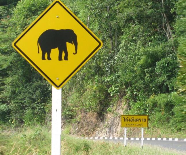 Осторожно слон на дороге